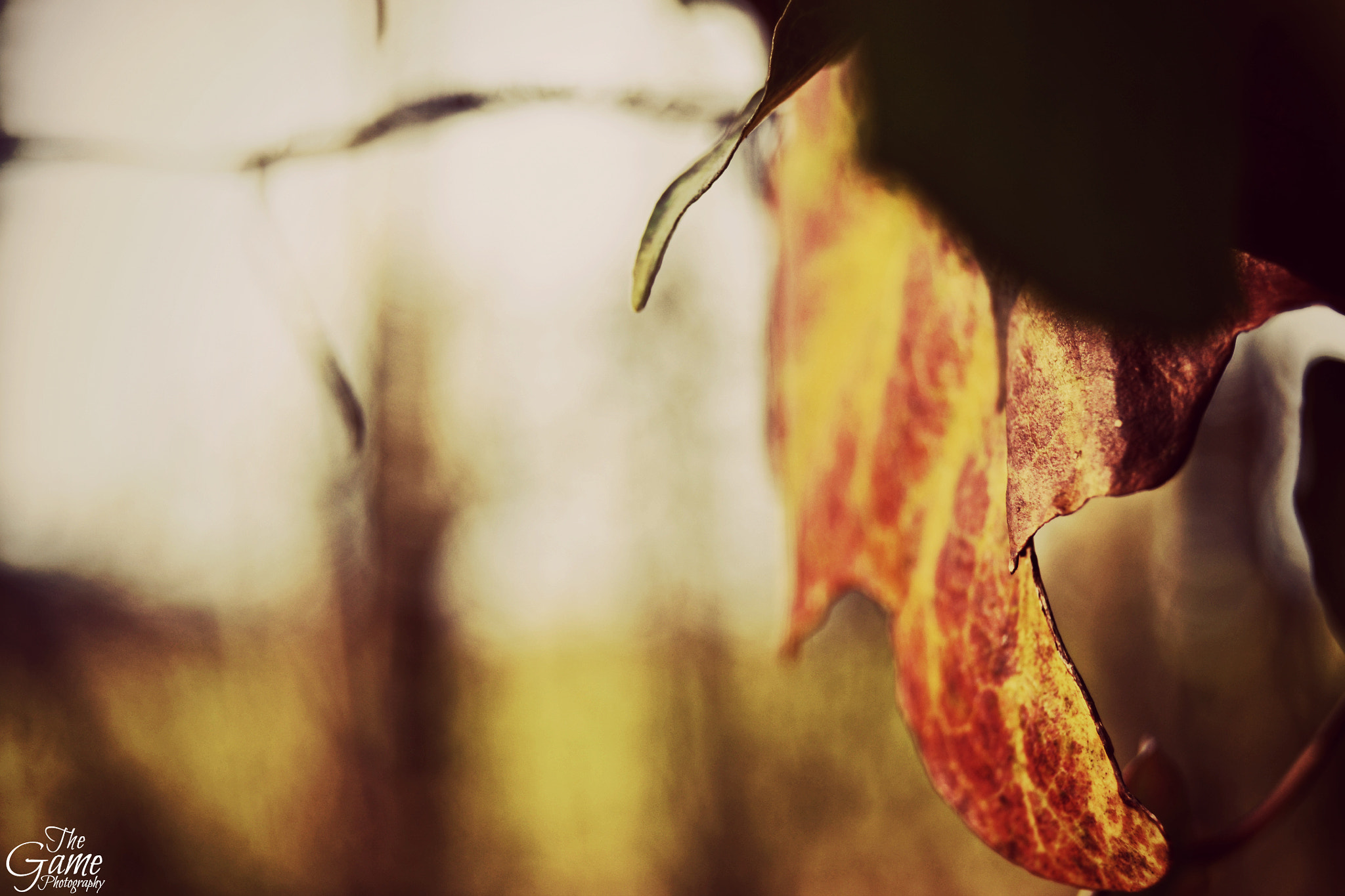 Photograph Les Feuilles Mortes I by The Game Photography on 500px