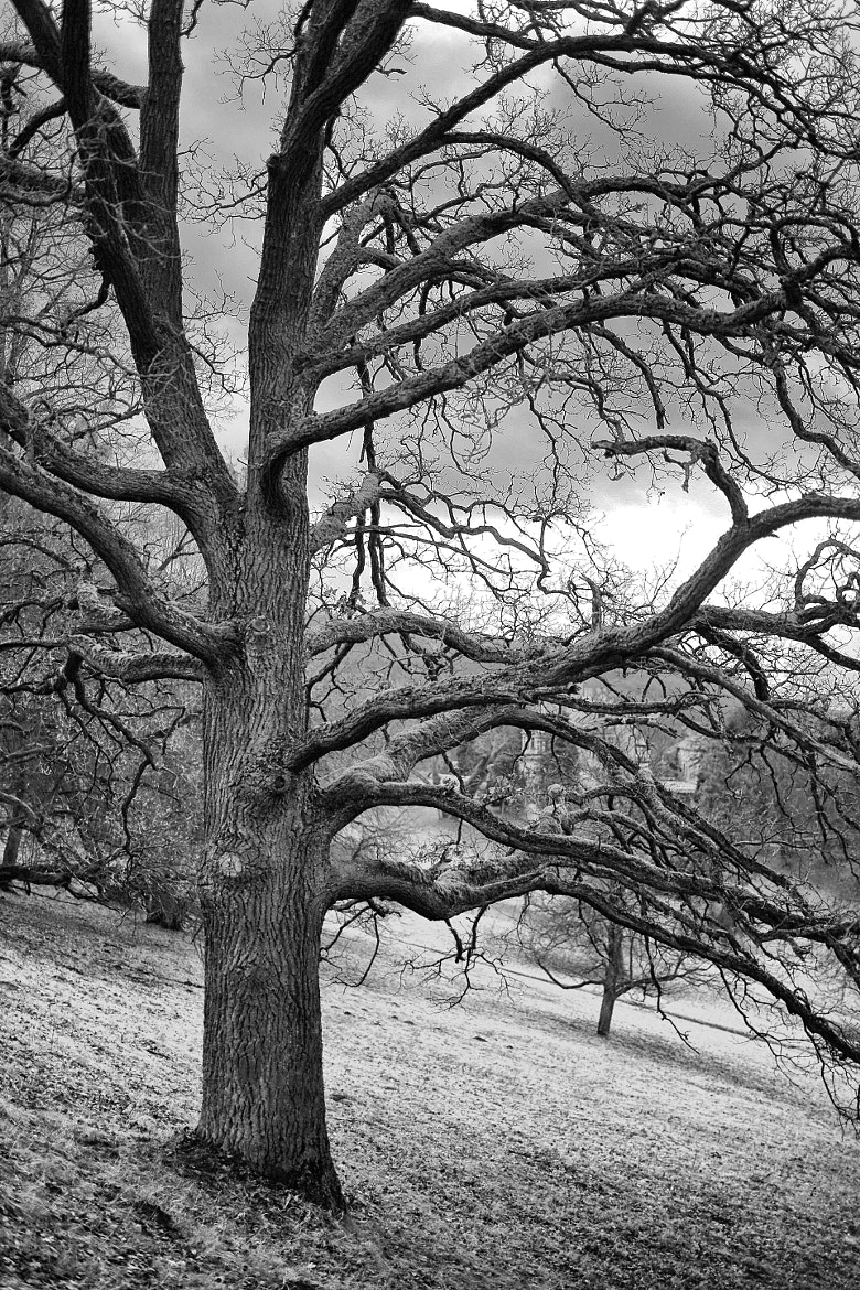 Photograph Black and White Tree by Oliver Schmidt on 500px