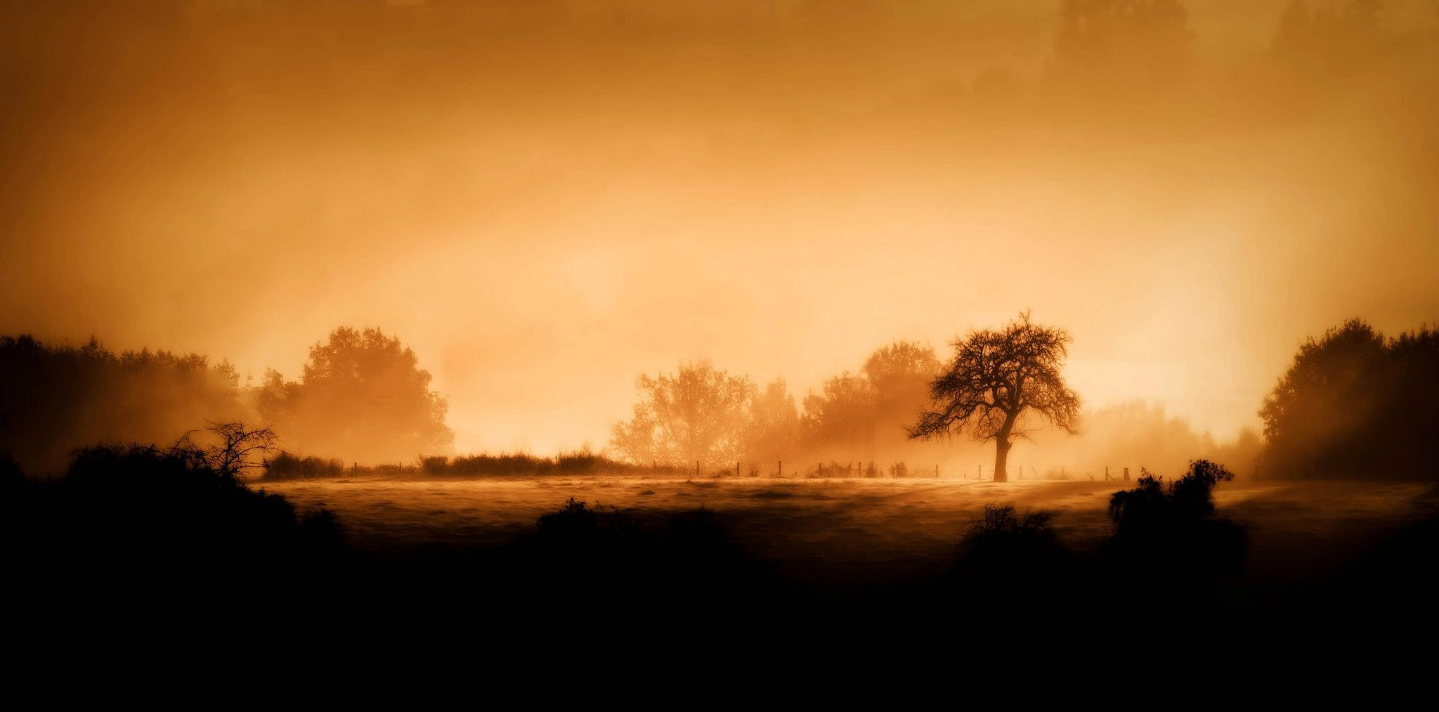 Photograph Fog and tree by Michael Sanchez on 500px