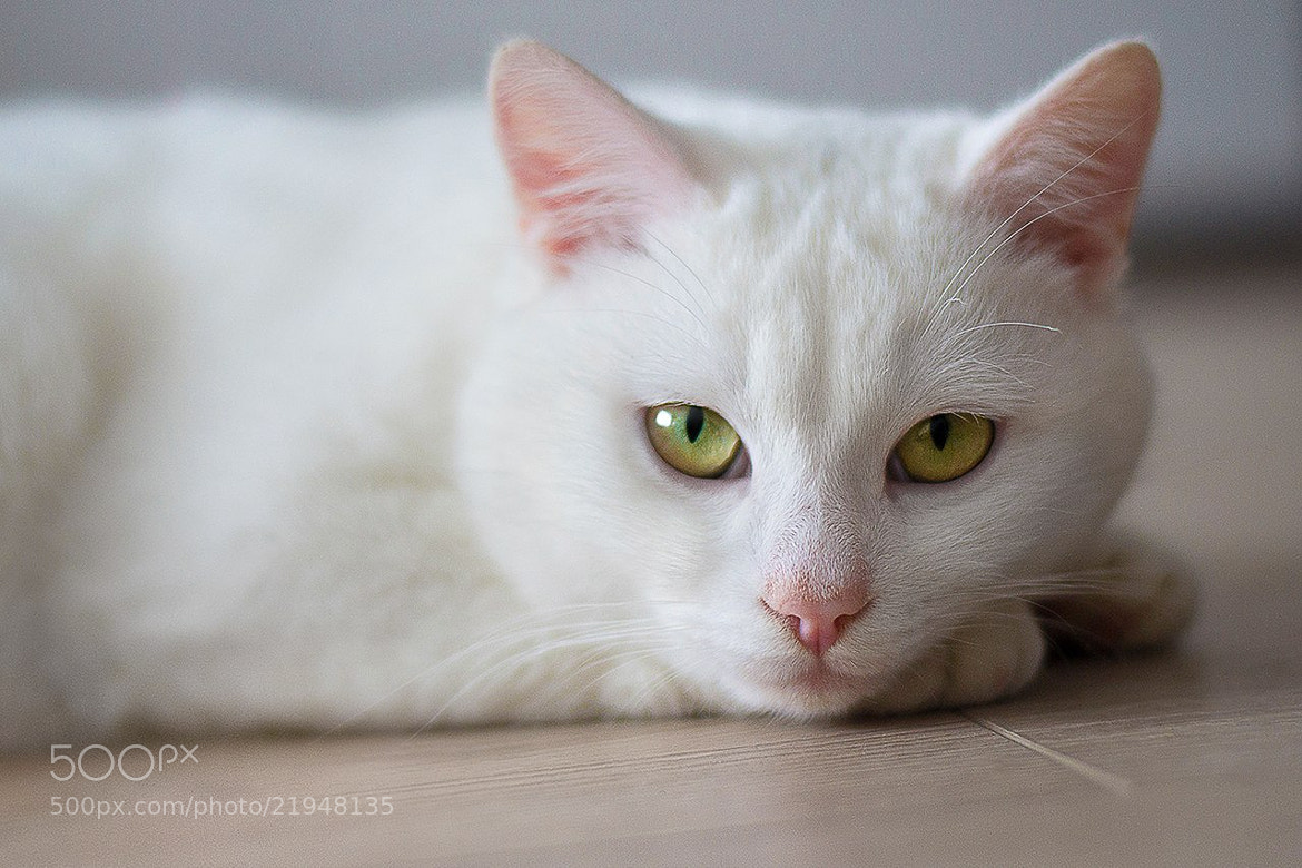 Photograph my cat by Nazar Kucher on 500px