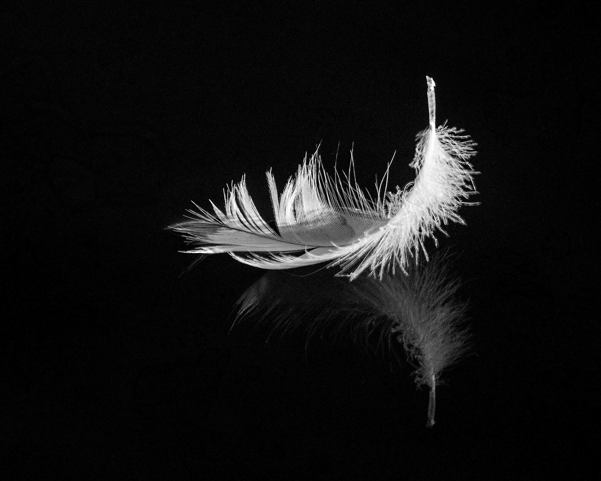 Photograph Feather by Balázs Nagy on 500px
