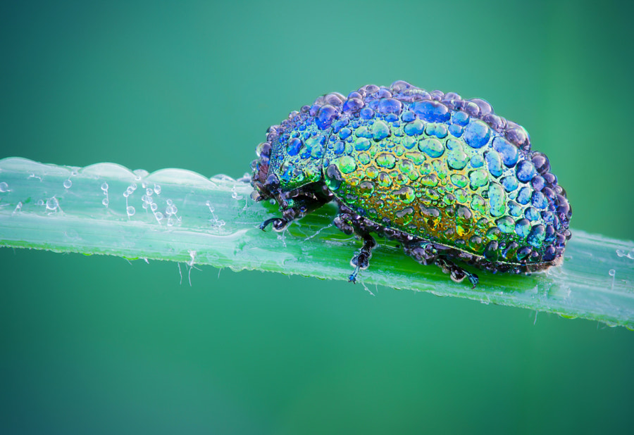 The jewel ! de David Chambon sur 500px.com