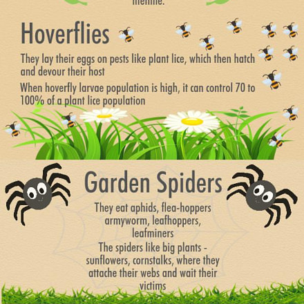 6 Bugs You Should Love in Your Garden