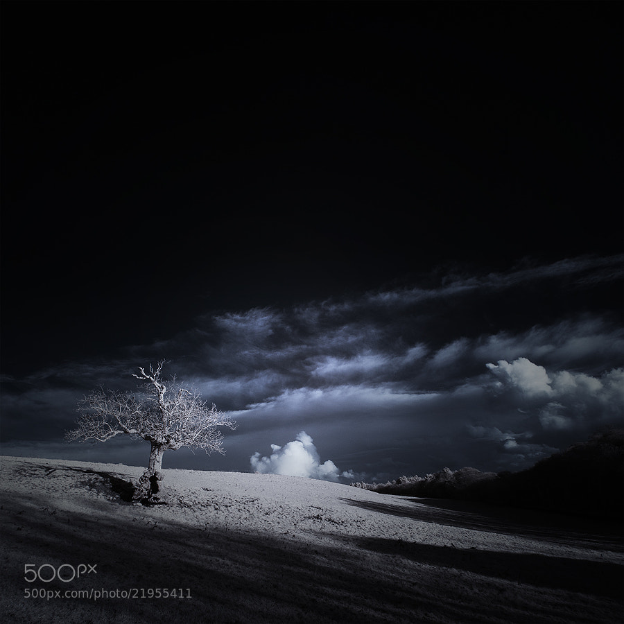 Photograph ѱ Tree 1ƒ infrared by Andy Lee on 500px