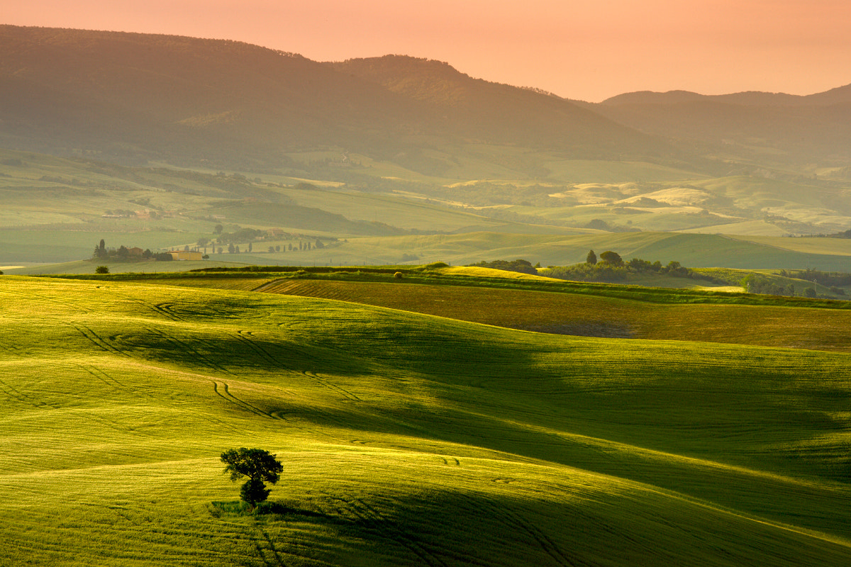 Photograph Shades of Green II by Laurent Decuyper on 500px