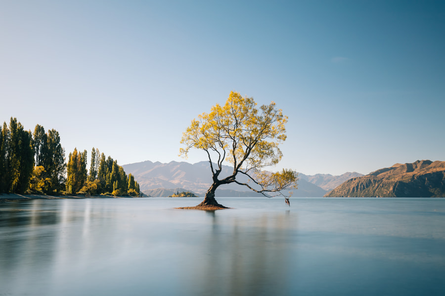 That Wanaka Tree by Kaitlyn McLachlan on 500px.com
