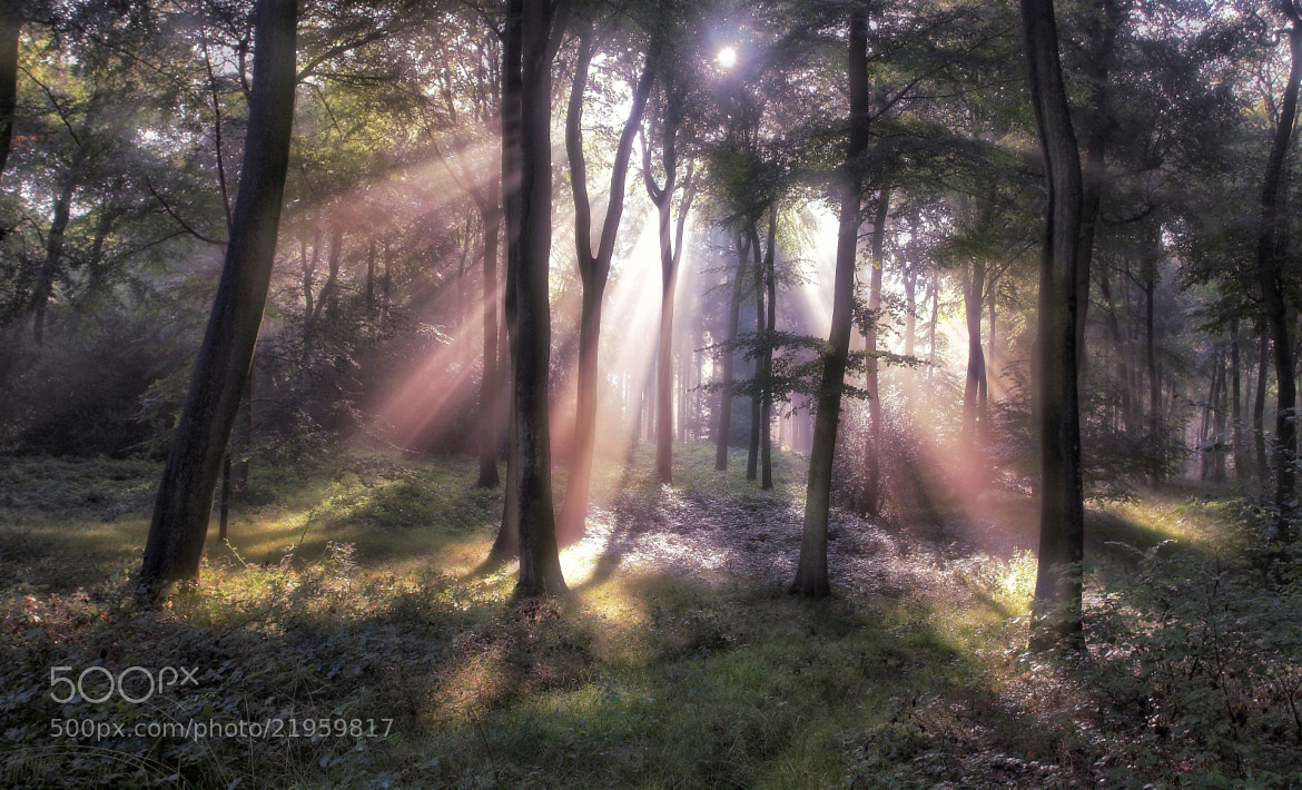 Photograph Woodland Sun Burst by Ceri Jones on 500px