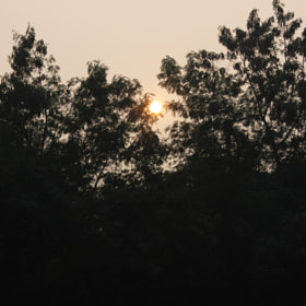 SUN hiding behind the trees :)