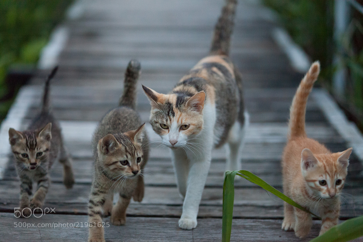 Photograph Let's go home by Seiji Mamiya on 500px
