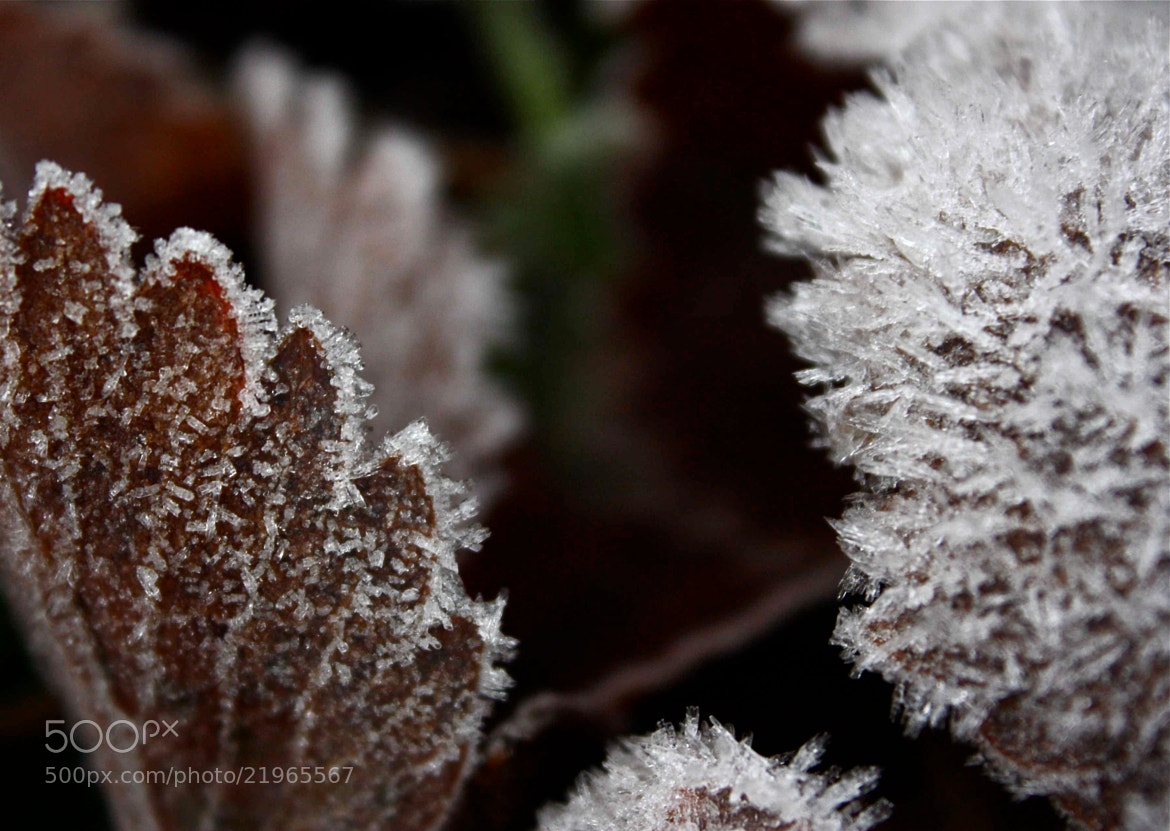 Photograph jack frost by Ann Matthew on 500px