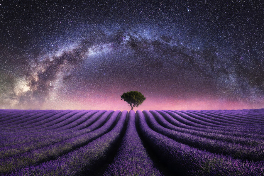 Lavender field valensole milky way night galaxy composite by Mads Peter Iversen on 500px.com