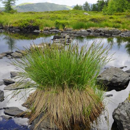 Grass.Water.Rocks.& Peace