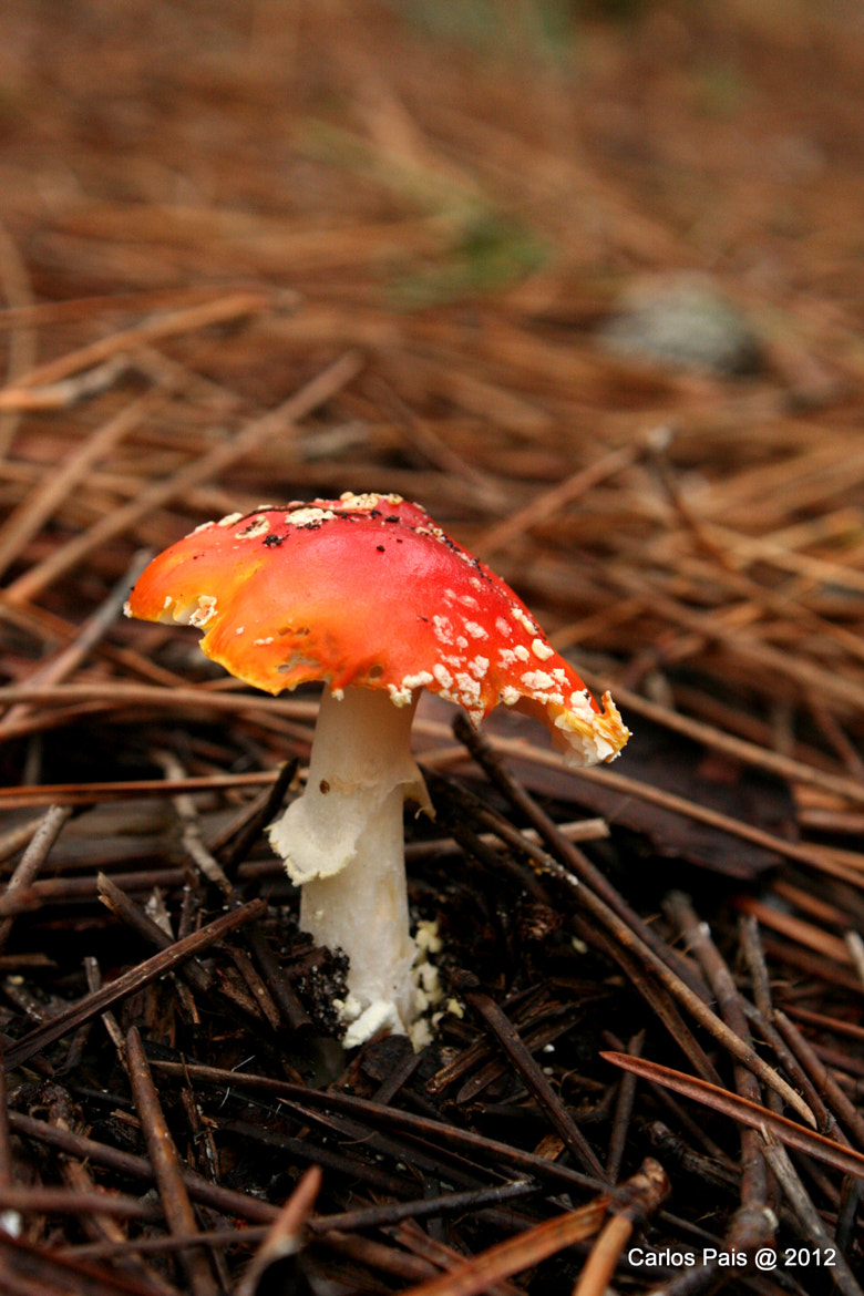 Photograph Amanita Muscaria by Carlos Pais on 500px