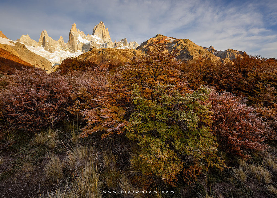 The Colors of Frost by Erez Marom on 500px.com