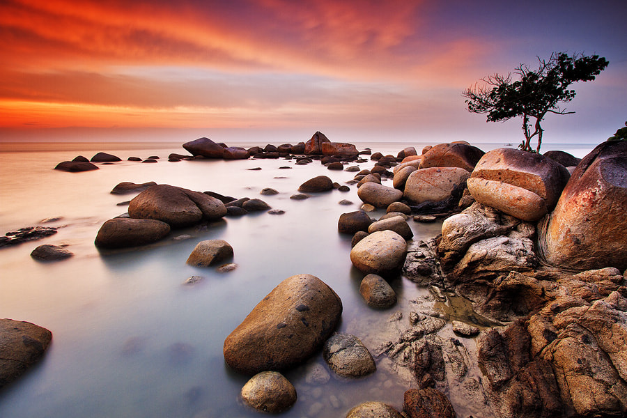Photograph Sturdy Tree by Bobby Bong on 500px