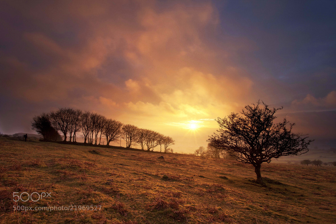Photograph Moorland Winters Glow by Chris Marshall on 500px