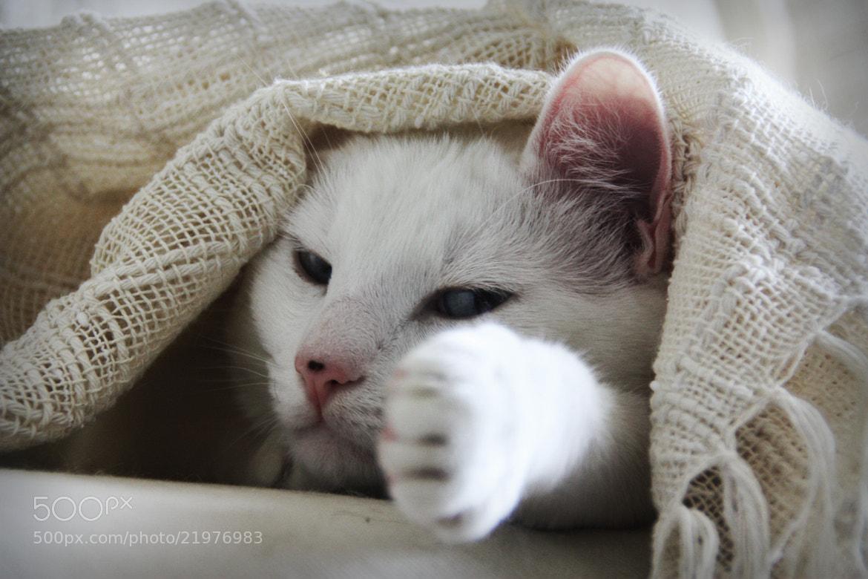 Photograph Hidden Cat by Mauricio Ferreira on 500px