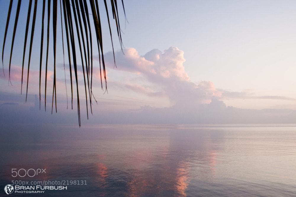 Photograph Abstract Paradise by Brian Furbush on 500px