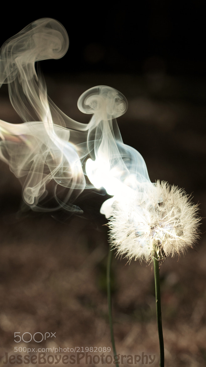 Photograph Smokin' Dandelion by Jesse Boyes on 500px