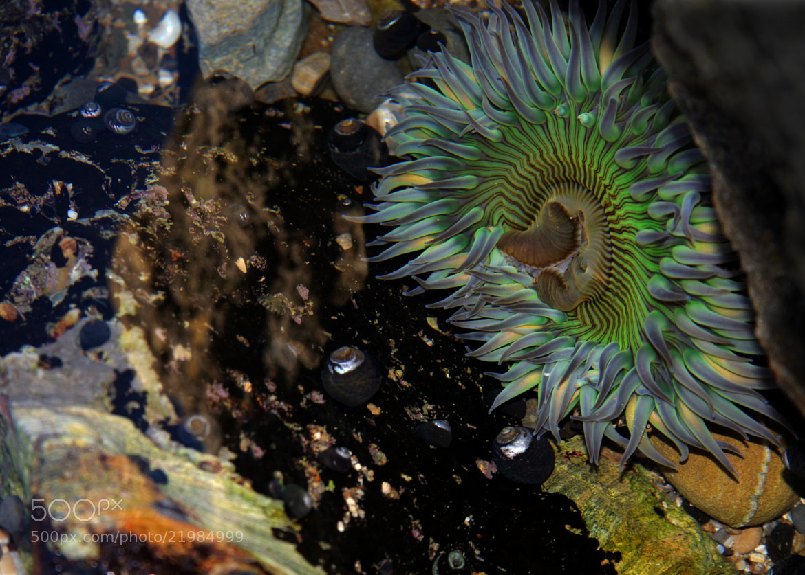 Photograph Sea Anemone by Charlie Abbott on 500px