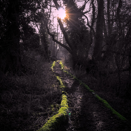 Thetford path