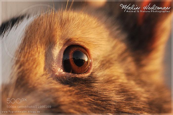 Photograph Eye of the rabbit. by Malin Hultman on 500px