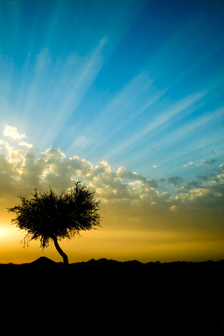 Photograph Tree Silhouettes by Naja Helal on 500px