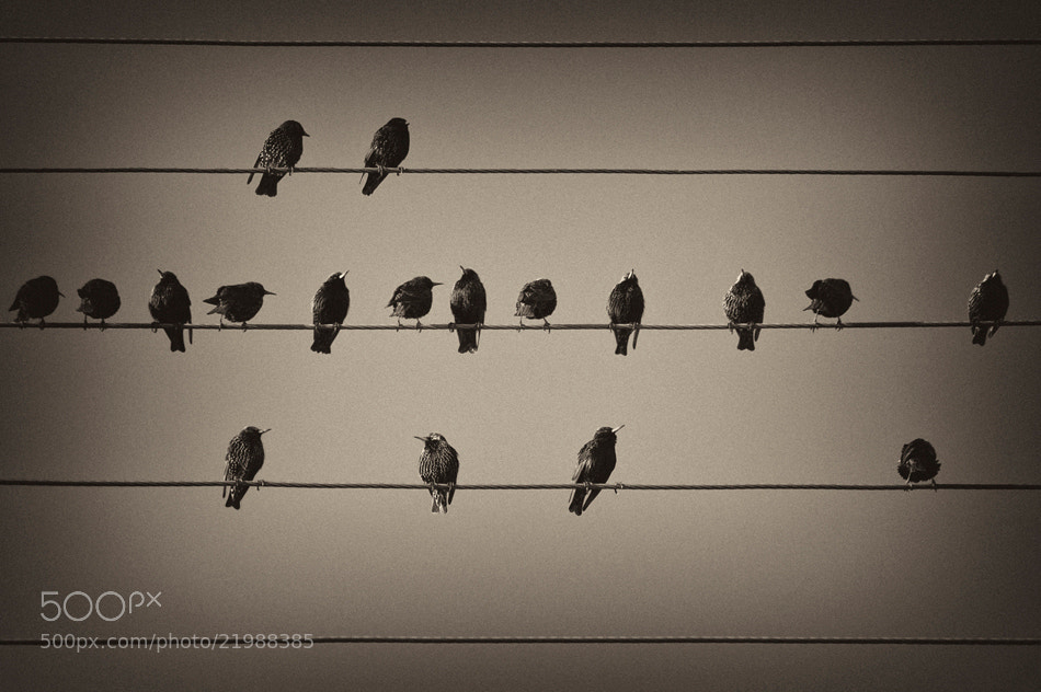 Photograph Music Notes by Rudi Zhang on 500px