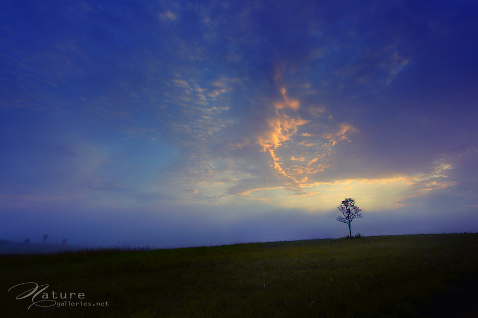 Photograph Tree in the sky  by Sasi - smit on 500px