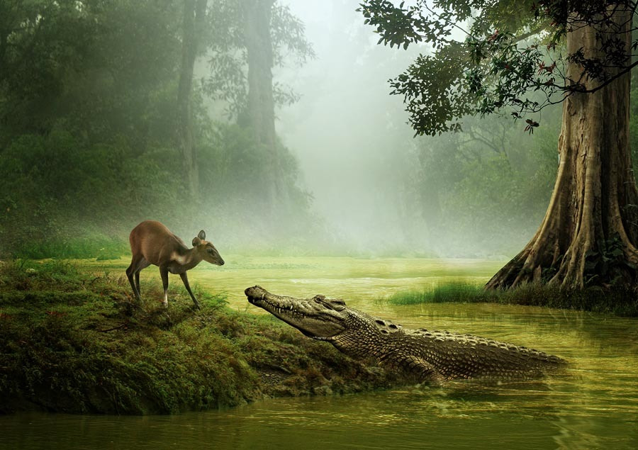 Photograph one day at the side of a river by budi 'ccline' on 500px