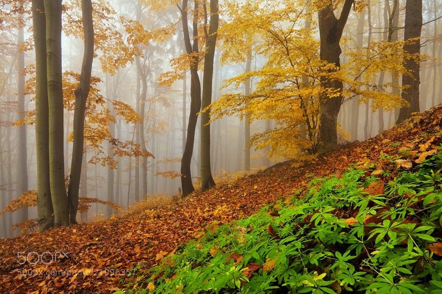 Photograph Autumn forest by Daniel Řeřicha on 500px