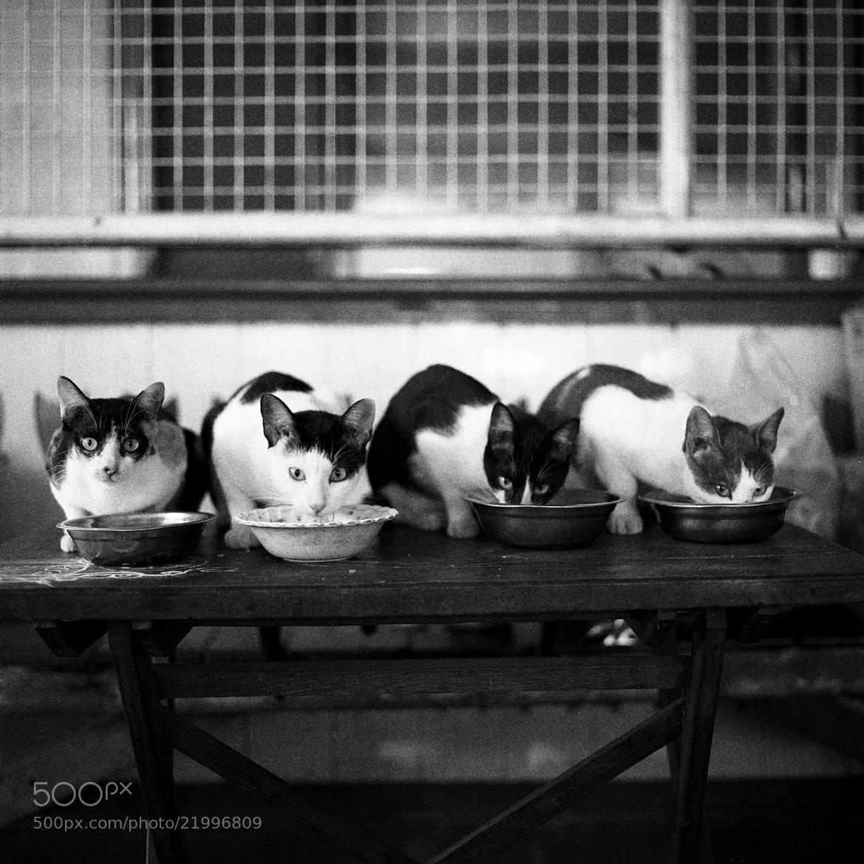 Photograph cats, inya myaing road by  momofuku on 500px