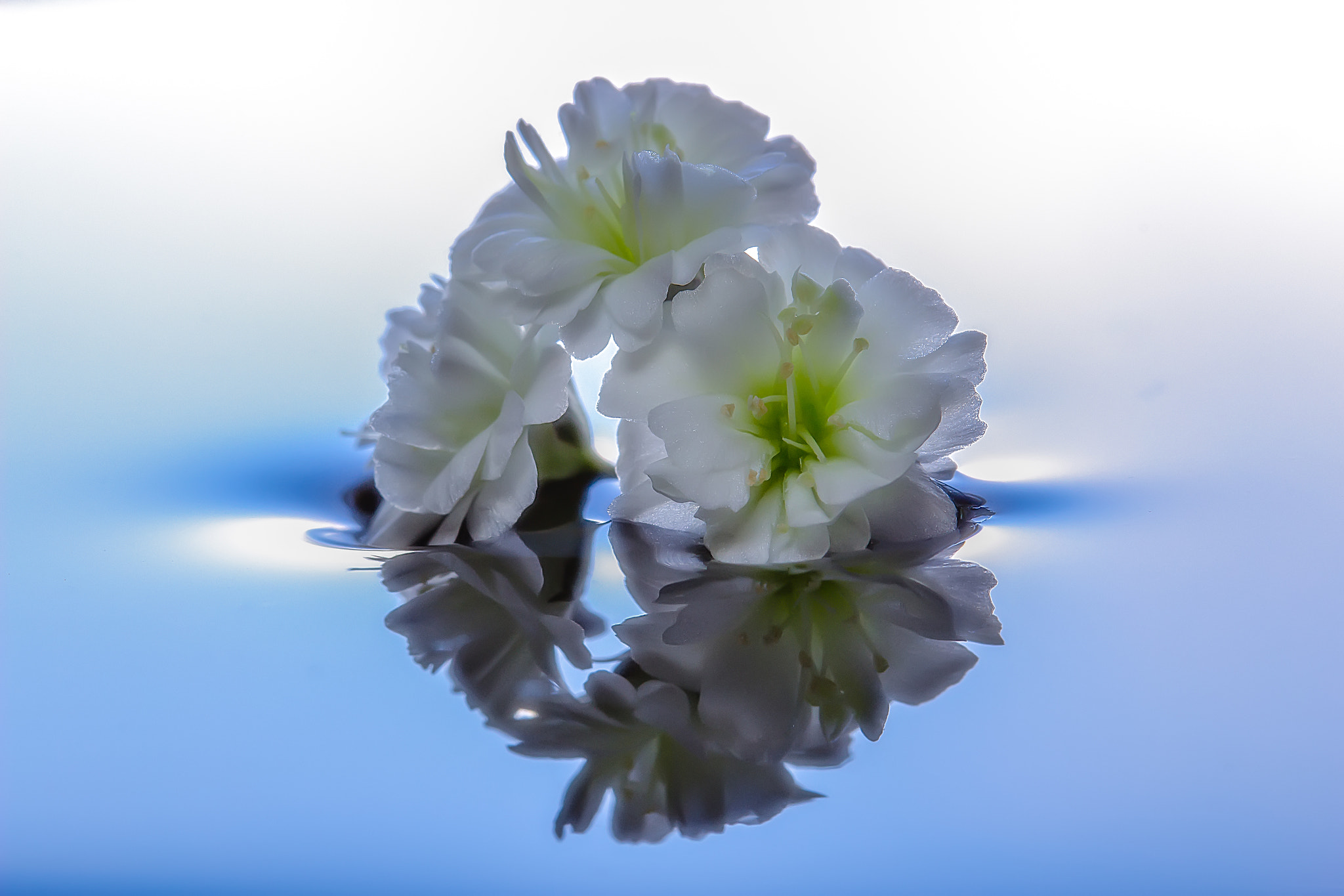Photograph Innocence by Miki Asai on 500px