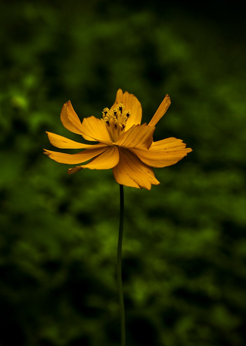 Photograph Standing Tall by Jatin  Maria on 500px