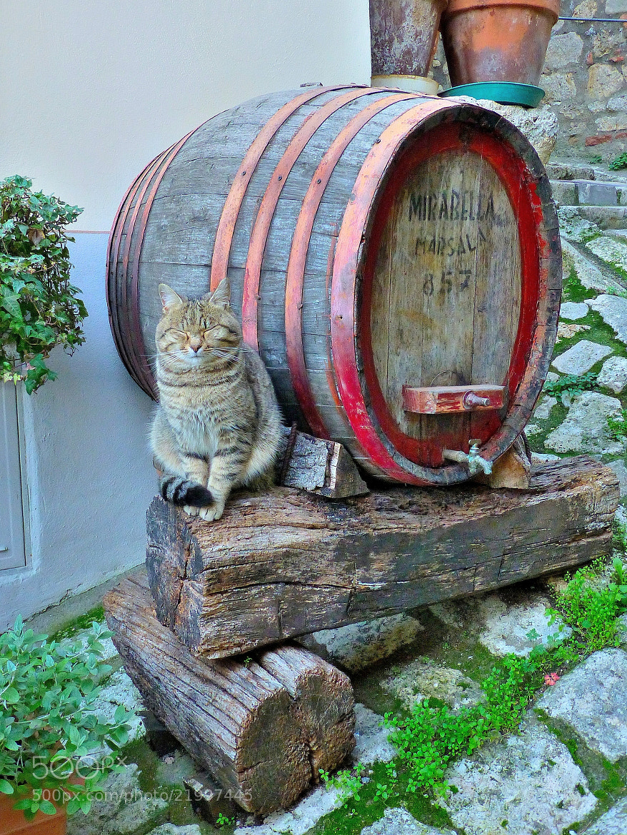 Photograph The guardian of the barrel!  by Renato Pantini on 500px