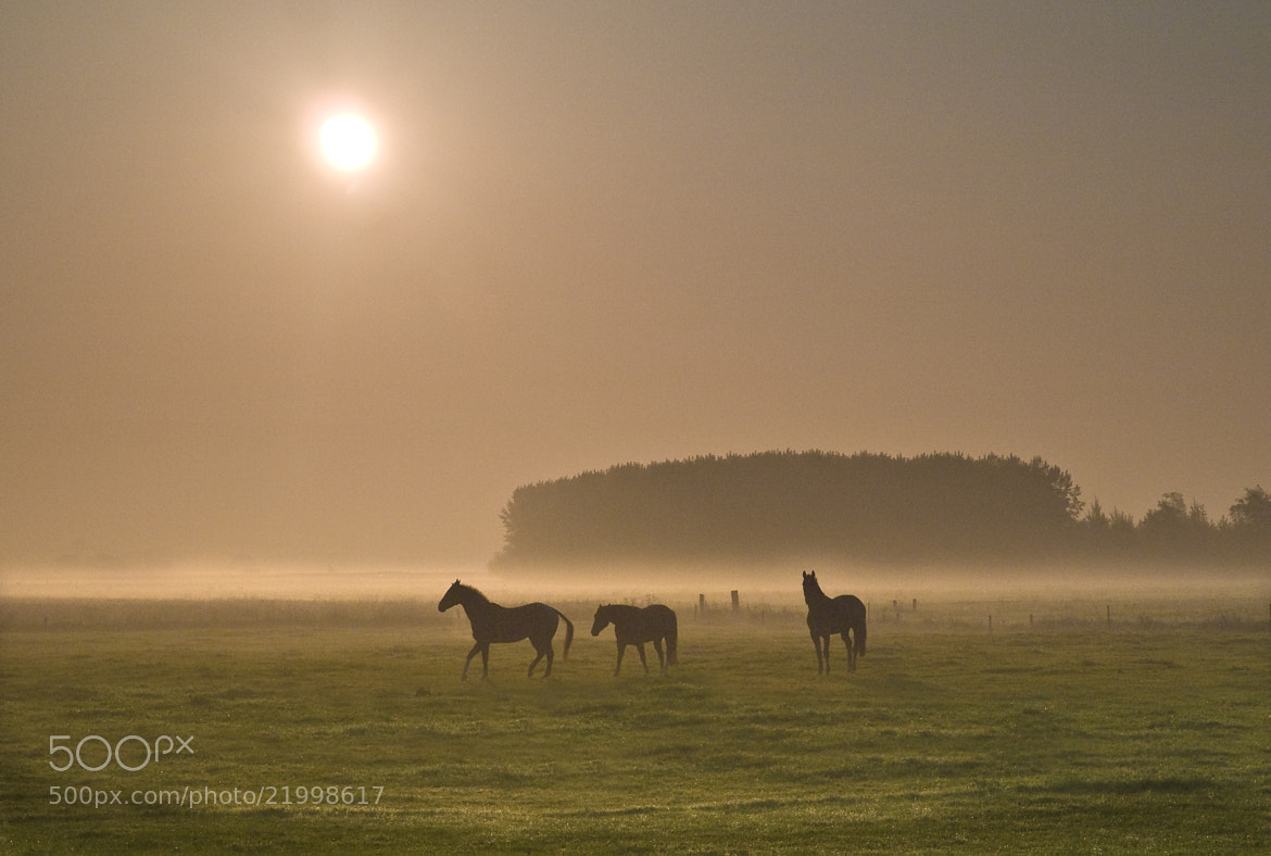 Photograph Horses in the morning by Nico van Gelder on 500px
