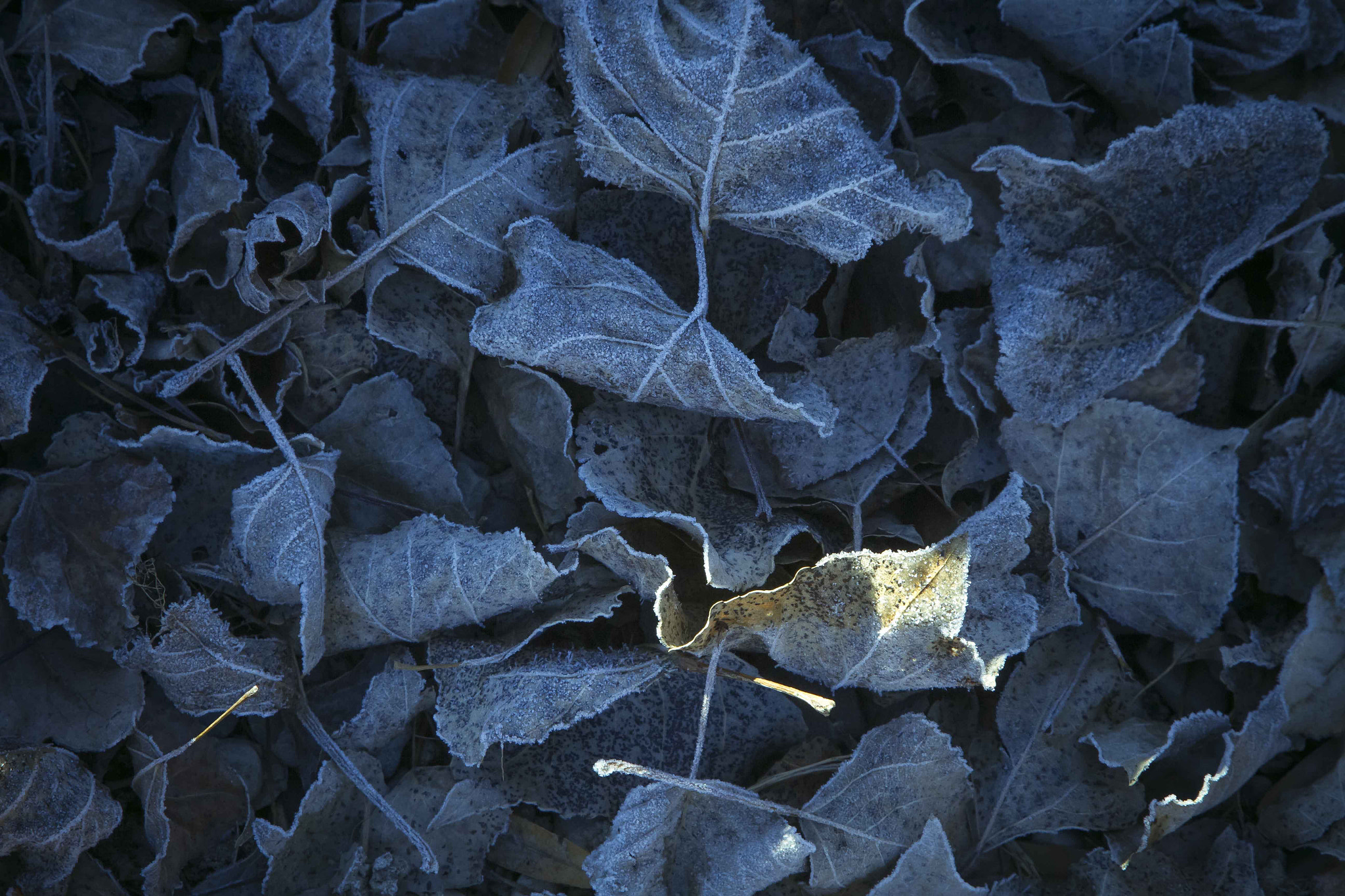 Photograph Frozen Leaves by Pedro Prestel on 500px