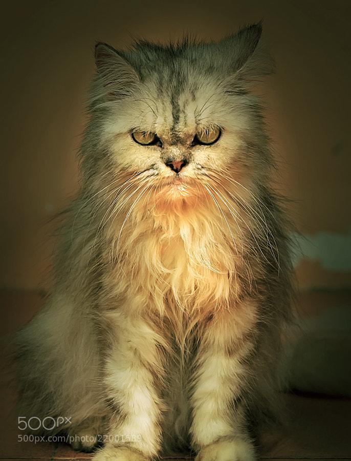 Photograph Cat Potrait6 by Sirajuddin Halim on 500px