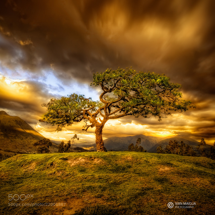Photograph Sacred Tree by Iván Maigua on 500px