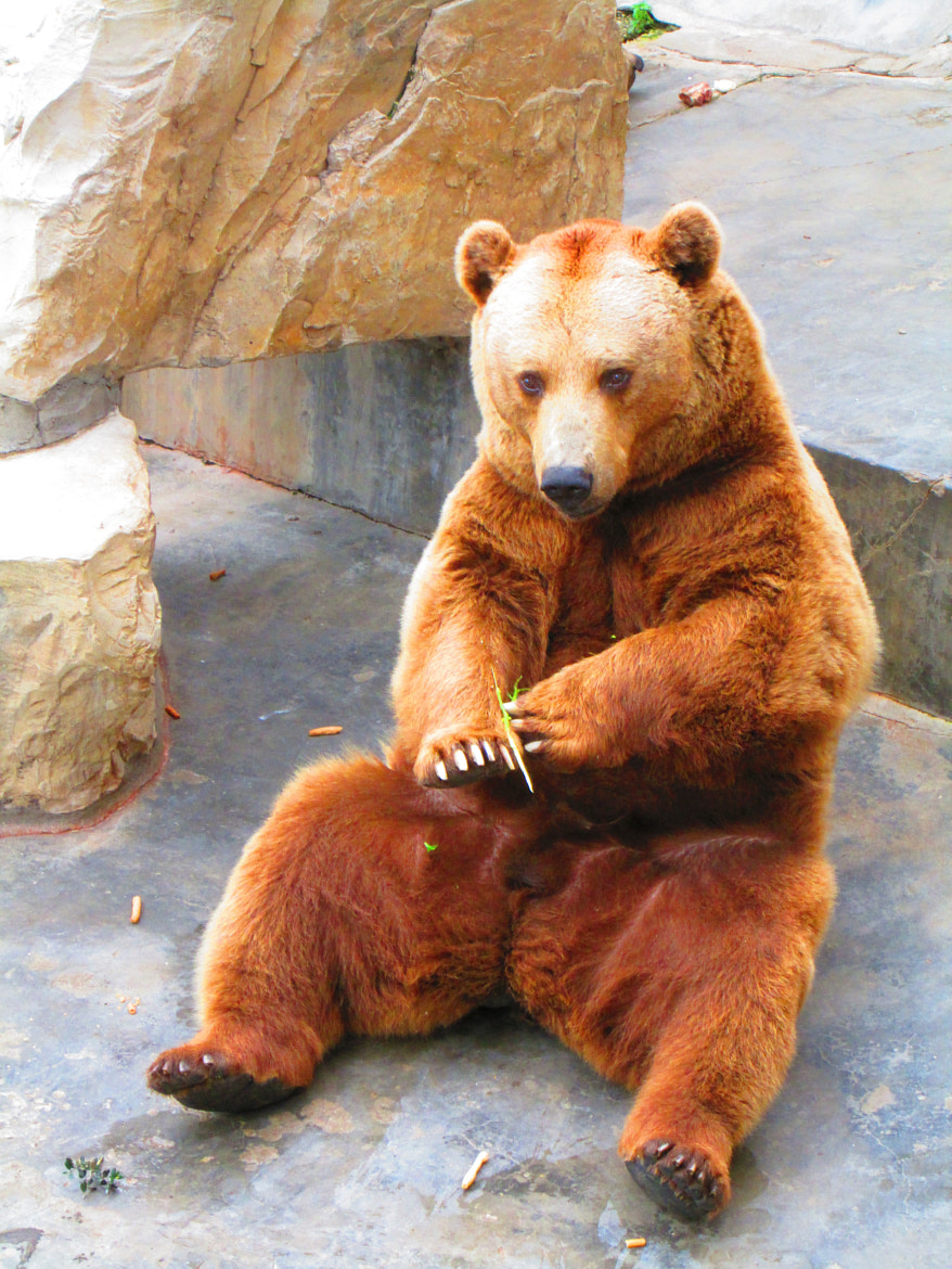 Photograph lonely bear by Nader Ghanja on 500px