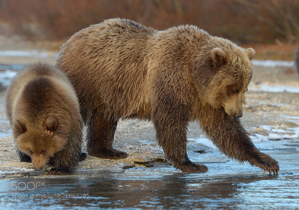 Photograph This is ice, son! by Igor Shpilenok on 500px