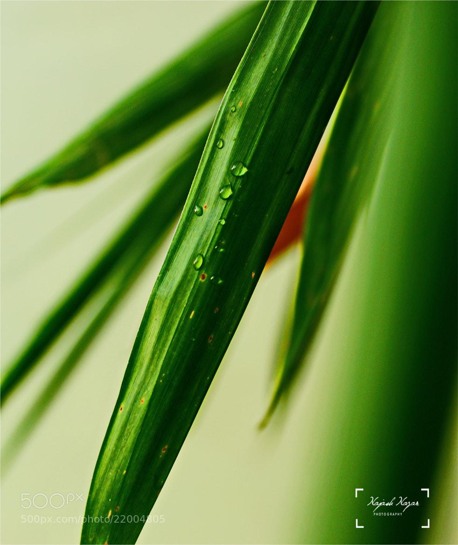 Photograph Greenish by Najash Nazar on 500px