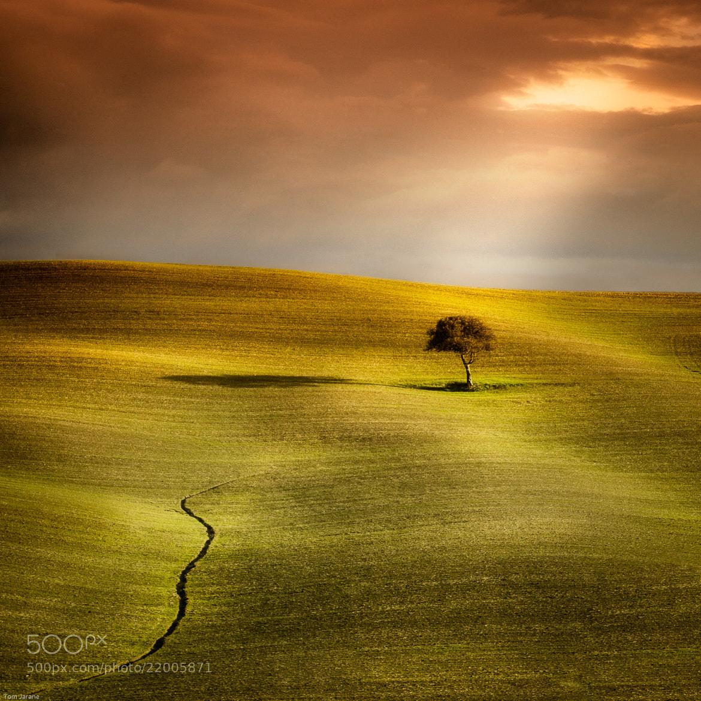 Photograph Tuscan tree by Tom Jarane on 500px