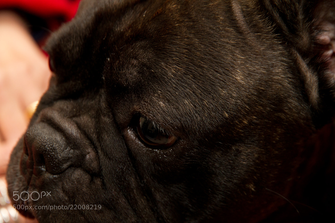 Photograph Dog Face by Christophe Berthe on 500px