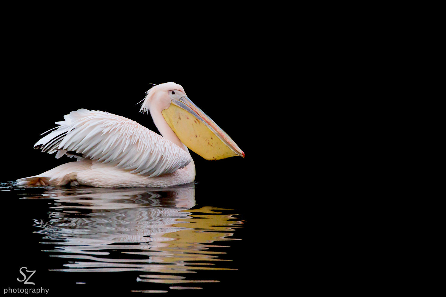 Photograph Pink Pelican by Stefan Zinsmeister on 500px