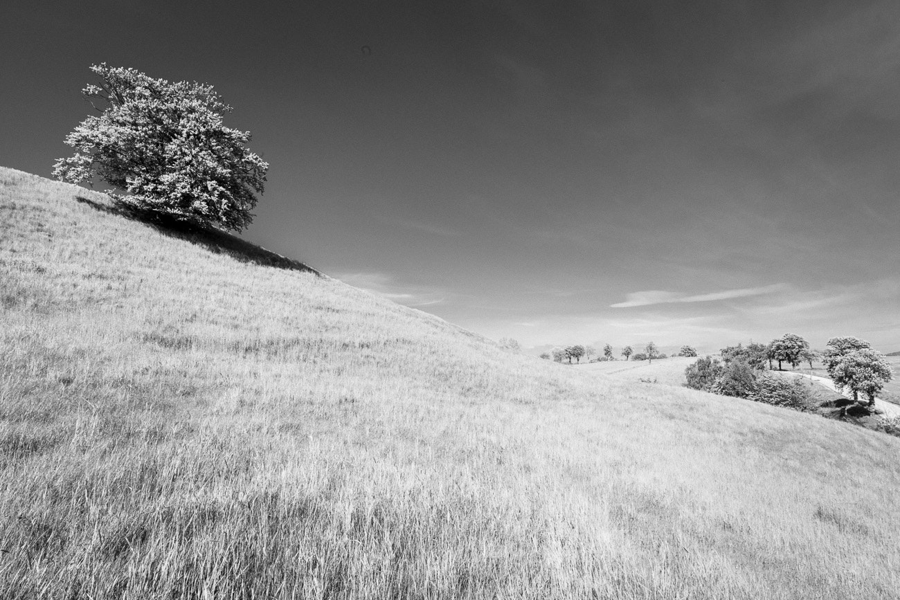 Photograph Trees by Niklas Hjelm on 500px