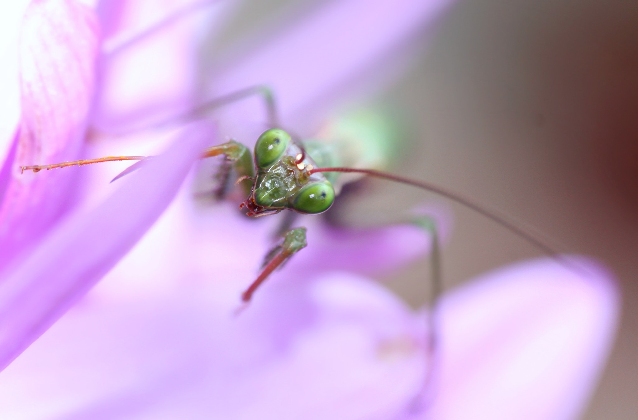 Photograph Mantis by Sandrine Fernandes on 500px