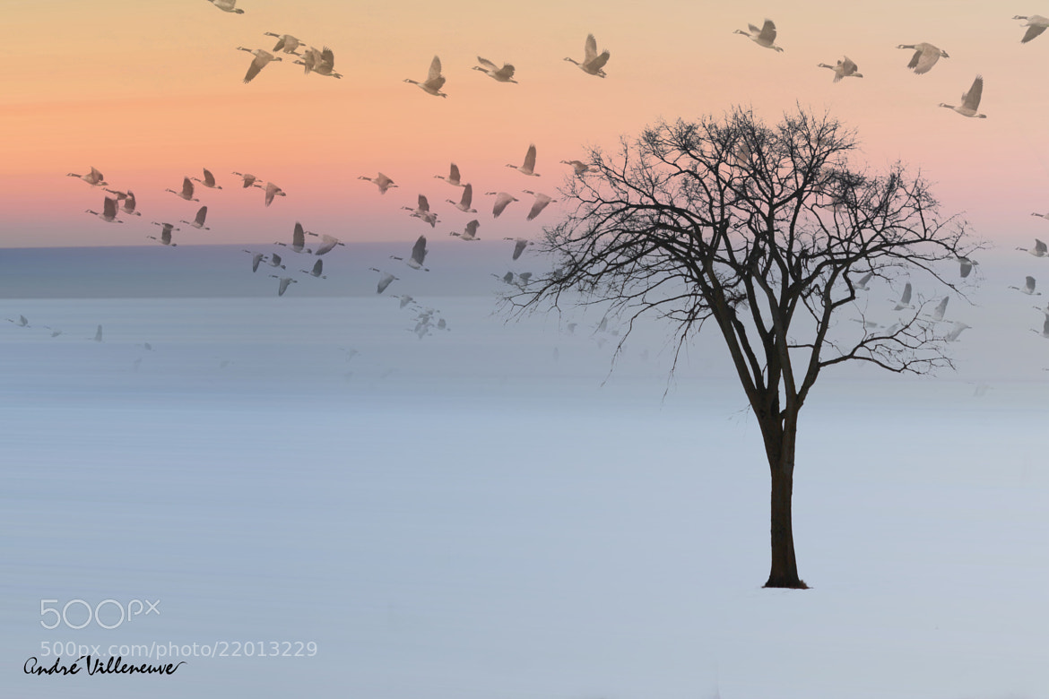 Photograph Good day by Andre Villeneuve on 500px