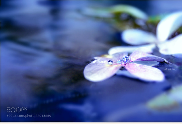 Photograph the drop of dew by elnoos . on 500px