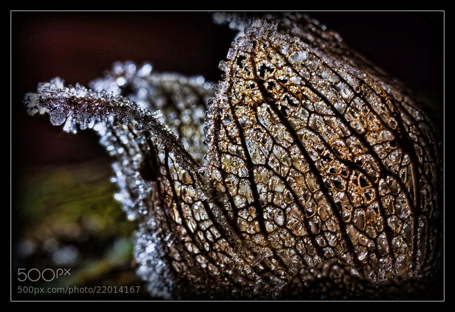 Photograph Frozen by Jaroslava Melicharová on 500px